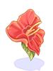 Hibiscus Desabrochado